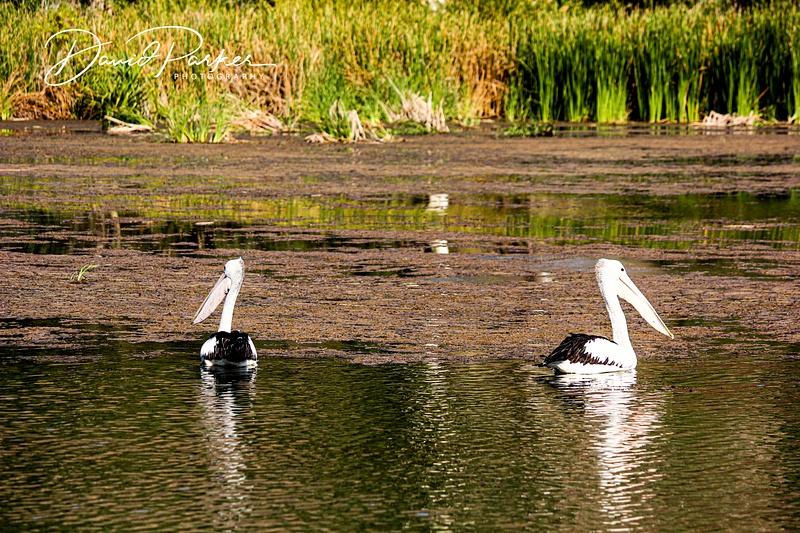 Birdlife on the Ord River