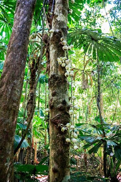 Daintree Rainforest Canopy by DavidParkerPhotography