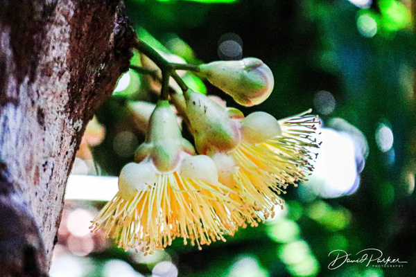 Daintree Rainforest by DavidParkerPhotography