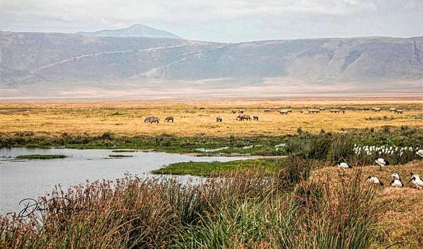 Ngorongoro Crater, Tanzania by DavidParkerPhotography