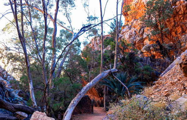 Walk to Stanley Chasm by DavidParkerPhotography