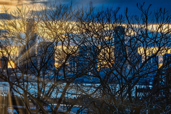 2018_003 - Behind The Trees - NewYork by ALEJANDRO DEMBO