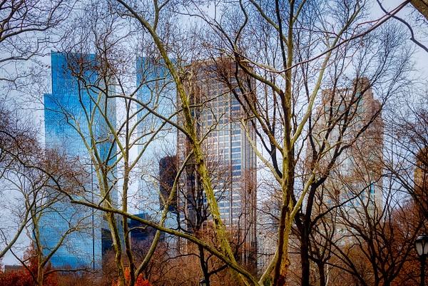 2018_009 - Behind The Trees - NewYork by ALEJANDRO DEMBO
