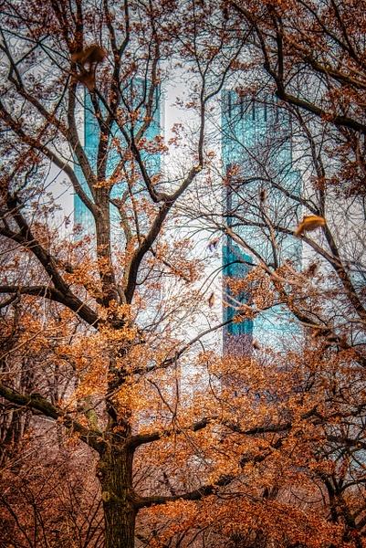 2018_011 - Behind The Trees - NewYork by ALEJANDRO DEMBO