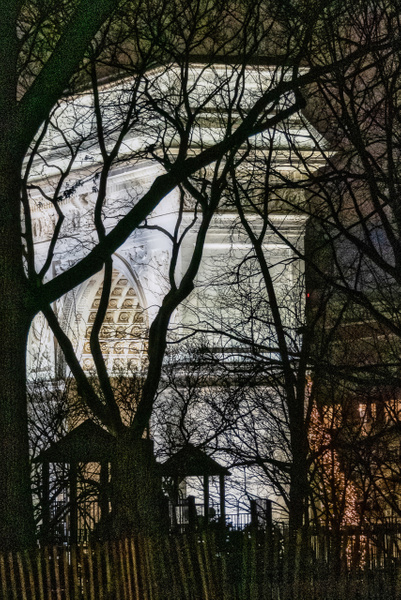 2019_003 - Behind The Trees - NewYork by ALEJANDRO DEMBO