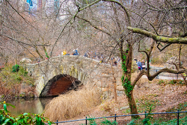 2018_010 - Behind The Trees - NewYork by ALEJANDRO DEMBO