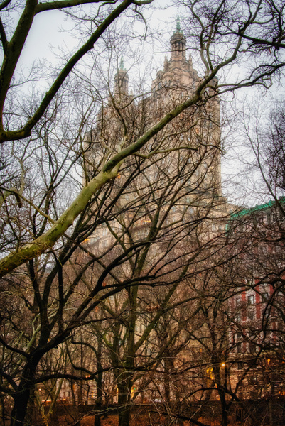 2019_001 - Behind The Trees - NewYork by ALEJANDRO DEMBO