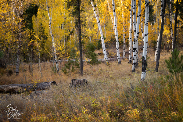 SD-10 - Nature - Fred Copley Photography