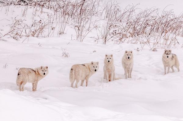 Montebello, QC - Wildlife - Alain Gagnon Photography