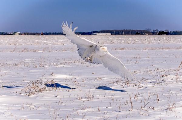 Ontario - Wildlife - Alain Gagnon Photography