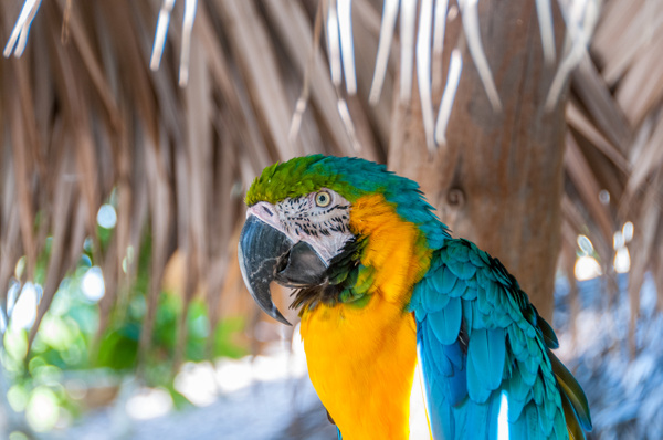 Nassau, Bahamas - Wildlife - Alain Gagnon Photography