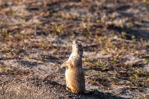 Yellowstone, WY - Wildlife - Alain Gagnon Photography