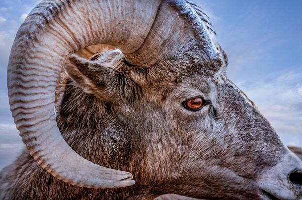 British Columbia - Wildlife - Alain Gagnon Photography