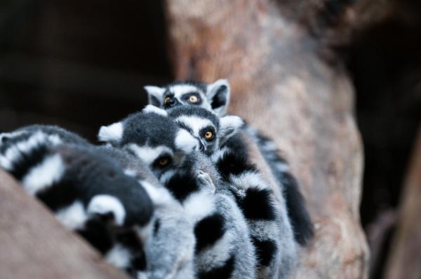 Toronto Zoo - Wildlife - Alain Gagnon Photography