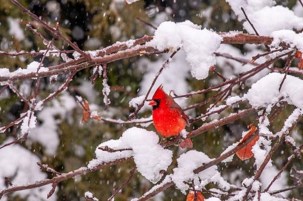 Ottawa, Ontario - Wildlife - Alain Gagnon Photography