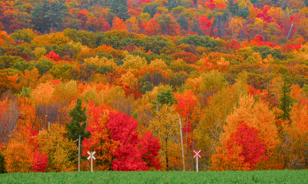 Morin-Heights, QC - Landscape and Nature - Alain Gagnon Photography
