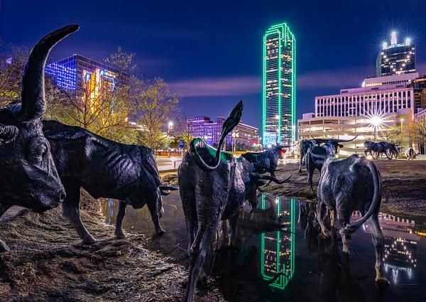Till the Cows Come Home - Portfolio - John Roberts