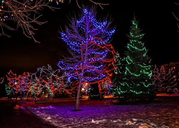Christmas Lights by BarbaraRothPhotography