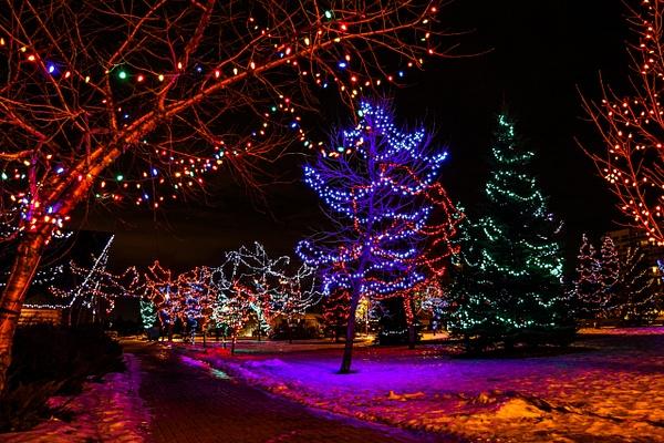 Christmas Trees by BarbaraRothPhotography