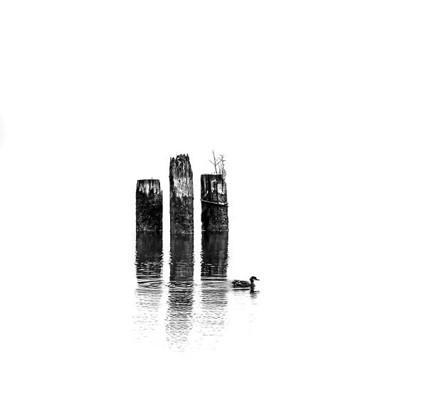 1 Duck - Minimalism - McKinlayPhoto