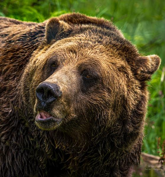 Grinder - Wildlife - McKinlay Photos