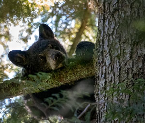 Just Resting - Wildlife - McKinlay Photos