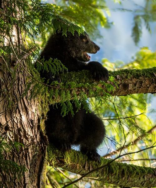 Bird's Eye View - Wildlife - McKinlay Photos