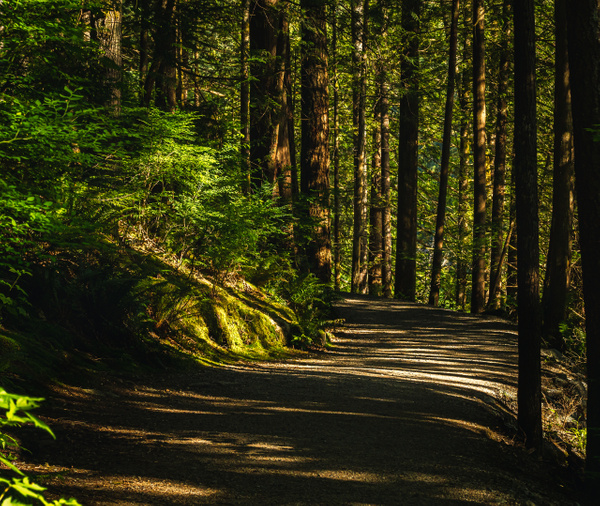 Early Morning Path - Plants and Trees - McKinlay Photo