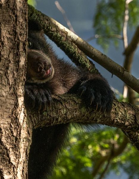 I See You - Wildlife - McKinlay Photos