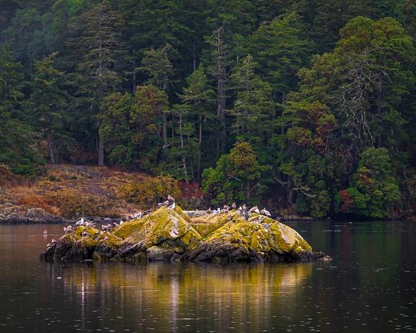 Esquimalt Lagoon - Landscape - McKinlay Photo