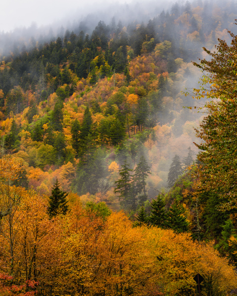 Smokies-autumn-colors-1 - HOME - Walnut Ridge Photography