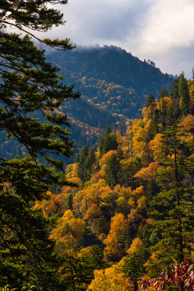 Smokies-autumn-colors-3 - AVIAN (copy) - Walnut Ridge Photography