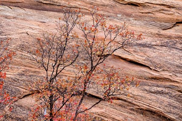 zion-valley-red-rocks - AUTUMN (copy) - Walnut Ridge Photography
