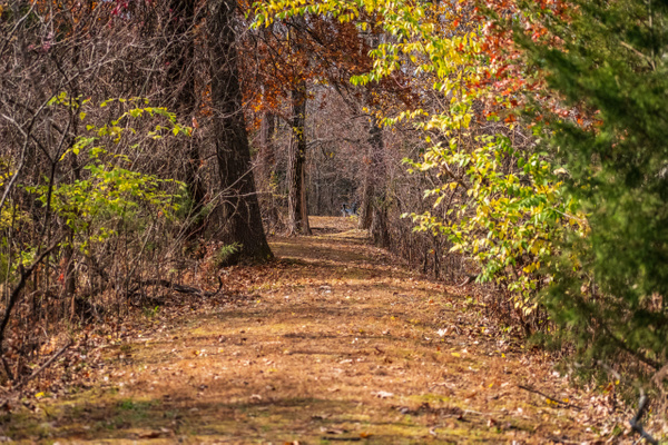 Country Lane - Home - KDS Imagery Photography