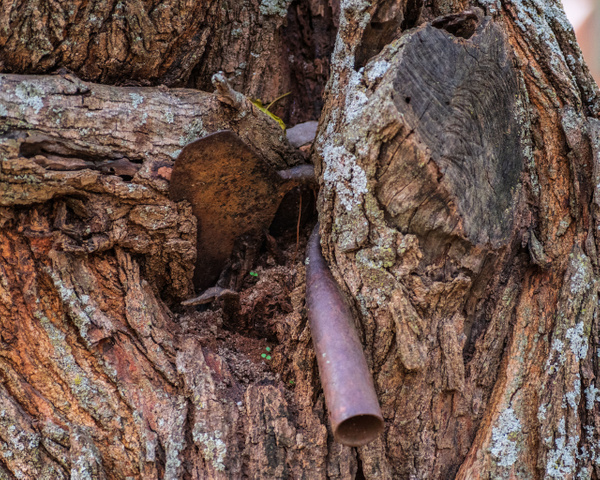 Hoe in a Tree - Home - KDS Imagery Photography