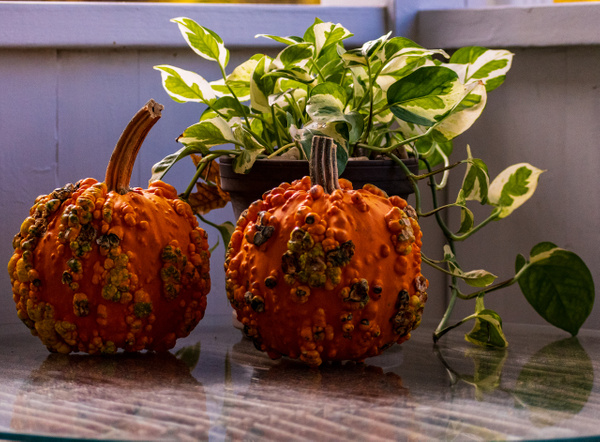 Fall Decor - Home - KDS Imagery Photography