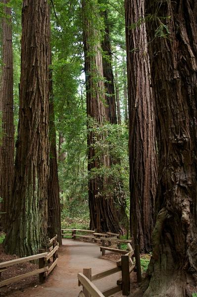 CA.SF713_730 - Nature - Jonathan C. Watson