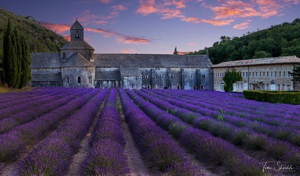 Lavender Fields - Tim shields photography