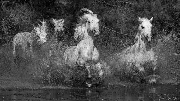 Tim Shields Photography - Landscape Photography