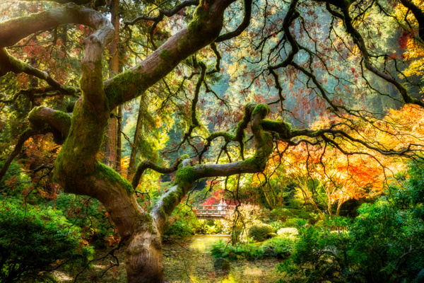 Japanese Gardens-532-Edit-2 - Home - Jax Photos