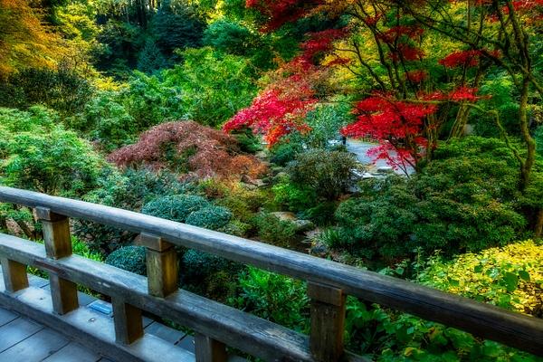 Japanese Gardens-444-Edit - Home - Jax Photos