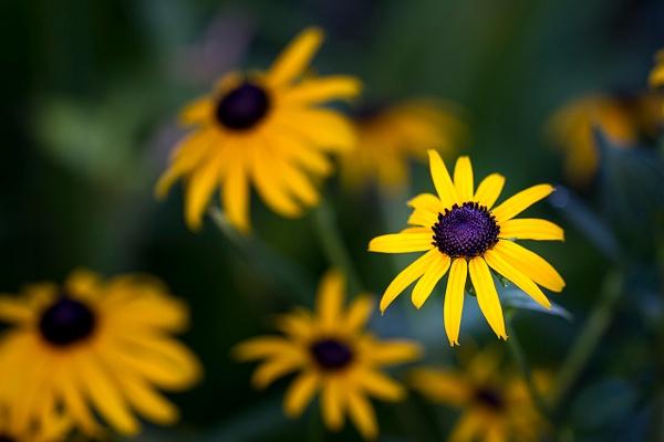 Yellow Daisy by Deb Uscilka