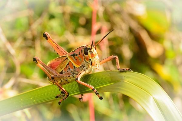 Locust, Florida by Jack Kleinman