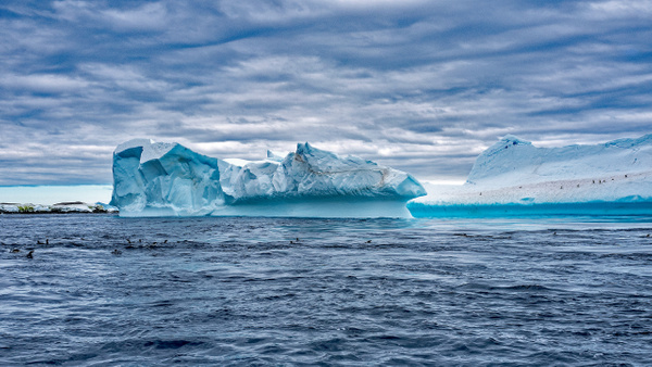3. KINNES COVE (13) - ANTARCTICA - January 2020 - François Scheffen Photography