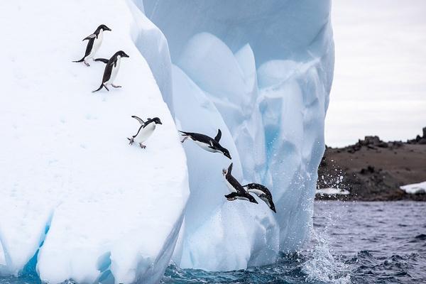 4. GOURDIN ISLAND  (23) - ANTARCTICA - January 2020 - François Scheffen Photography