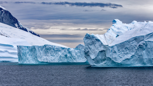 8. CUVERVILLE ISLAND (1) - ANTARCTICA - January 2020 - François Scheffen Photography