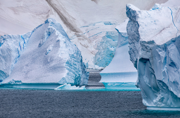8. CUVERVILLE ISLAND (3) - ANTARCTICA - January 2020 - François Scheffen Photography