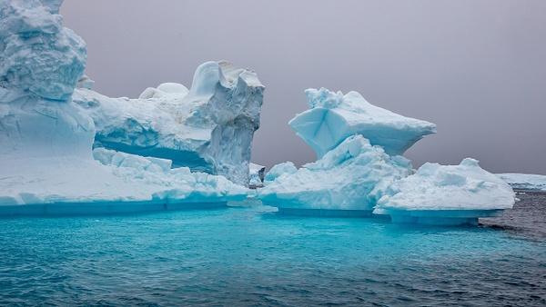 10. PLENEAU ISLAND (3) - ANTARCTICA - January 2020 - François Scheffen Photography