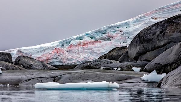 10. PLENEAU ISLAND (6) - ANTARCTICA - January 2020 - François Scheffen Photography