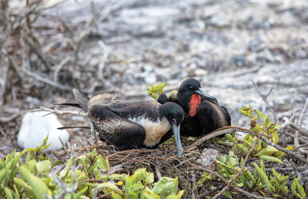 2 - Genovesa - Prince Philip's Steps  (11) - GALAPAGOS - May 2017 - François Scheffen Photography